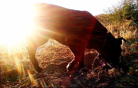 kona kony