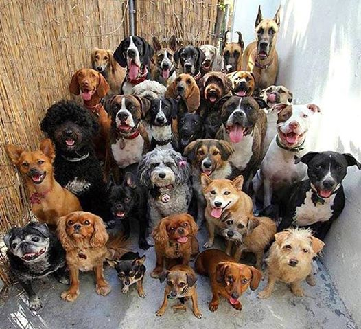30 dogs