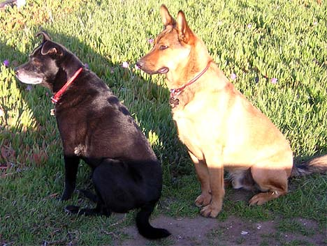 Kona and Vivor Guarding Battery Osgood