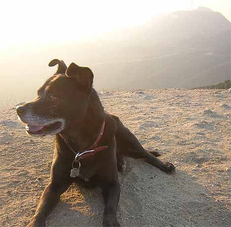 Kona at the Hollywood sign